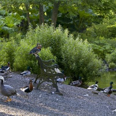 Bird Garden seat